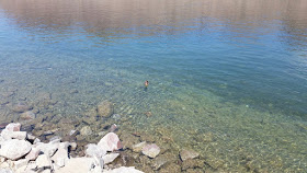 This duck was already having a grand time in the crisp and clear water.