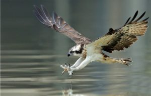 kayaking the Black Canyon birds